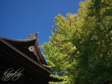 千本公孫樹2.jpg