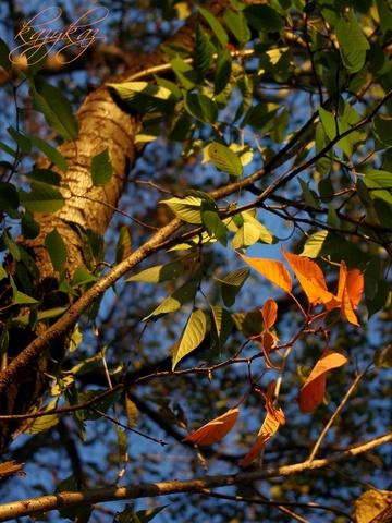 朝の葉.jpg