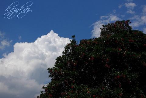 木の実と夏空.jpg