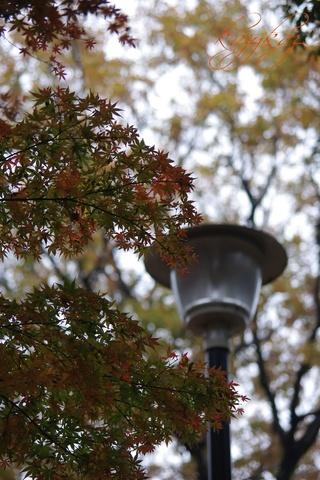 紅葉と外灯.jpg